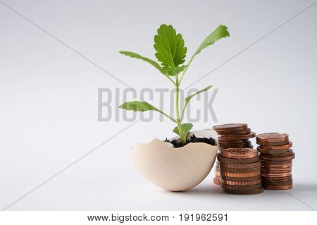 Coins and plant in eggshell isolated on white background with copy space. Concept with stacked copper coins which symbolizes a profitable business success fortune luck happiness.