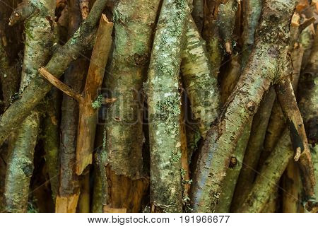 A pile of dry branches of pine and birch