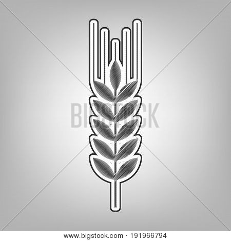 Wheat sign illustration. Spike. Spica. Vector. Pencil sketch imitation. Dark gray scribble icon with dark gray outer contour at gray background.