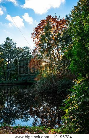 Pond in the autumn park with trees reflected in it at sunset