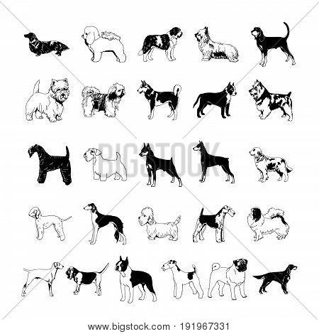dog clipart cartoon. Vector Illustration.. Collection set