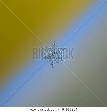 Real snowflake glittering on smooth yellow - blue - gray gradient background. Macro photo of real snow crystal: small stellar dendrite with glossy, relief surface and fine hexagonal symmetry.