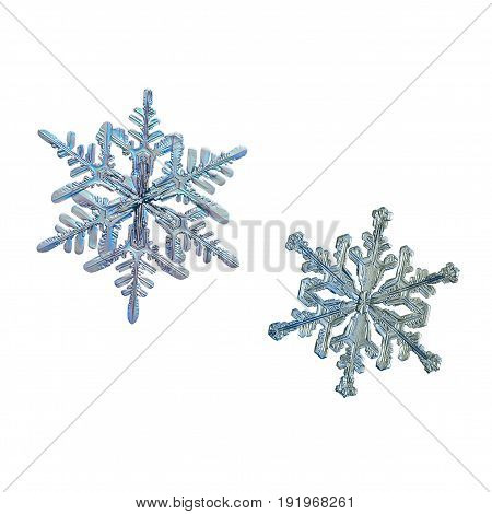 Set with two snowflakes isolated on white background. Macro photo of real snow crystals: elegant stellar dendrite with complex shape, fine hexagonal symmetry and thin, long arms with side branches.
