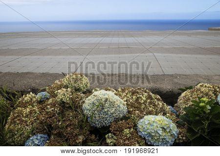 Plantation Sea View