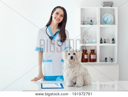 Beautiful Smiling Veterinarian Doctor And Cute White Dog In Vet Clinic