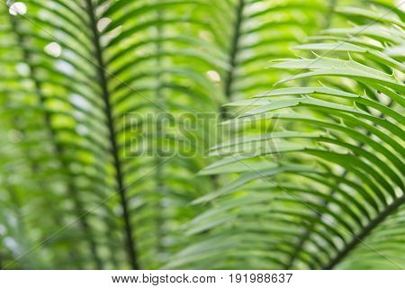 Close-up palm fronds with thorns sunlit backlight. Stock photo background with selective focus point and shallow depth of field.