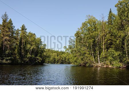 Thickets of trees on the shore of a forest lake on the Bolshoi Solovetsky Island sunny summer day