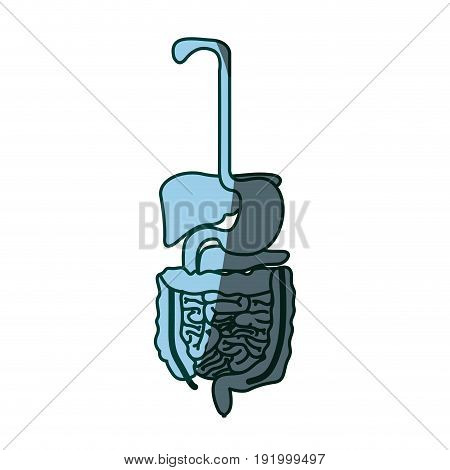 blue color shading silhouette human digestive system vector illustration
