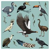 hand drawn vector realistic bird, sketch graphic style, set of domestic. griffon vultures, cockatoo and broad-billed parrot. rhinoceros hornbill and extinct species. moa, dodo and feather poster