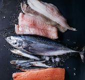 Variety of raw fresh fish. Whole tuna and herring, fillet of salmon, cod, red fish on crushed ice over dark wet metal background. Top view with space. Fish market concept poster