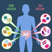 Intestinal flora gut health vector concept with bacteria and probiotics icons. Human flora good and bad microorganism illustration poster
