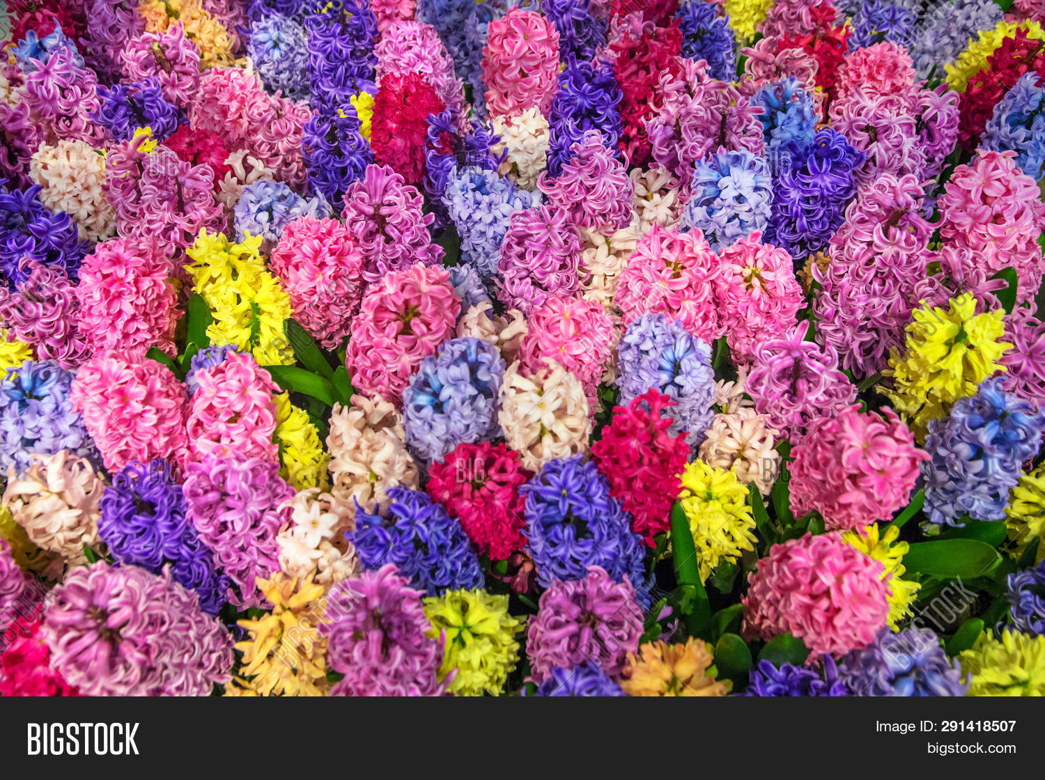 Multicolored Bright Image Photo Free Trial Bigstock