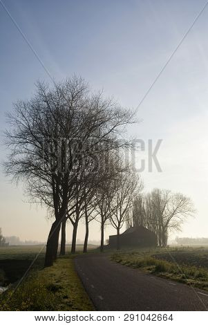 Row of trees along a road on a misty morning near the Dutch village hank in the province Noord-Brabant poster