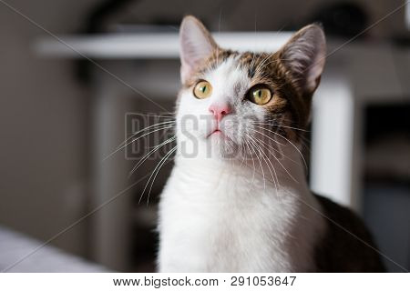 A Cat Looking Up, Animal Portrait, Home Interior Concept