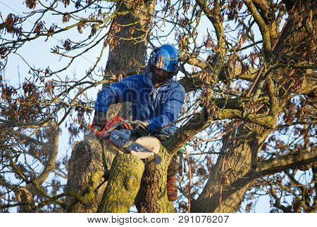 Buckingham, Uk - January 30, 2019. A Tree Surgeon Uses A Chainsaw To Cut A Branch From An Oak Tree.
