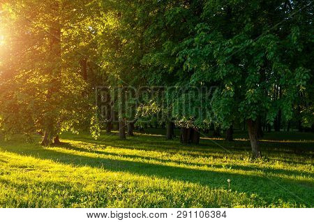 Forest summer landscape - forest trees with grass on the foreground and sunlight shining through the summer forest trees, colorful forest summer nature