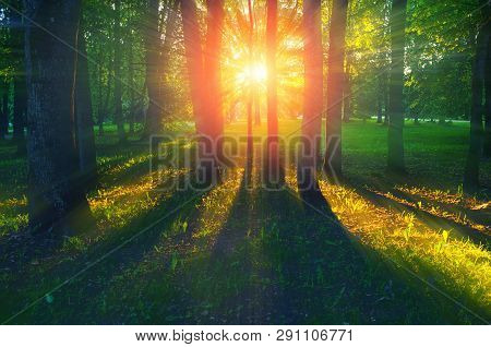 Forest summer landscape - forest trees with grass on the foreground and sunlight shining through the summer forest trees, colorful summer forest nature