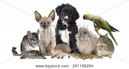 A Large Group Of Different Animals Isolated On A White Background, Which Includes Puppy Dog, Kitten,