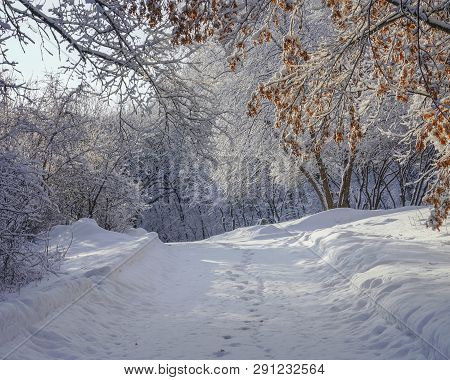 Beautiful Winter Landscape In Eden Prairie, Minnesota