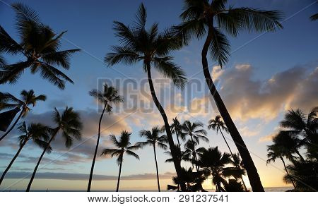 A Tropical Beach Vacation Background With Palm Trees.