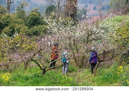 Chengdu, Sichuan Province, China - March 20, 2019: People Walking And Enjoying Peach Blossom Trees I