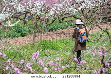 Chengdu, Sichuan Province, China - March 20, 2019: Chinese Photographer Taking Photos Of Peach Bloss