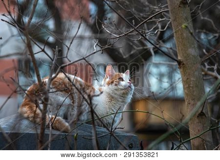 The cat sits on the fence and hunts the birds poster