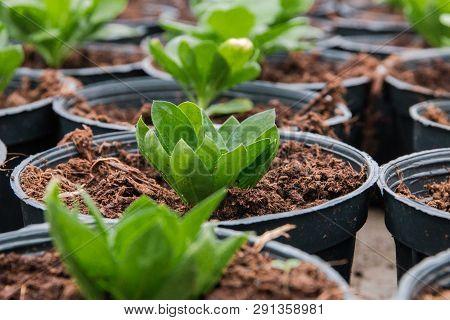 Seeding In Greenhouse. Seeding Plants Greenhouse. Seeding In Greenhouse Concept. Plant Seedling In G
