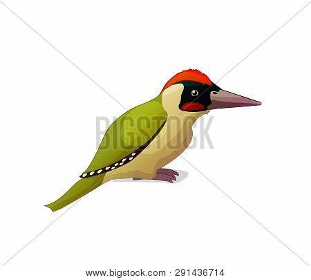 Vector Cartoon Animal Clip Art Green Woodpecker
