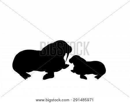 Walrus Cub Walrus Arctic Black Silhouette Animal. Vector Illustrator.