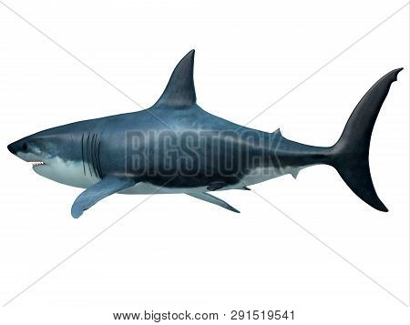 Megalodon Predator Shark Tail 3d Illustration - Megalodon Was An Enormous Carnivorous Shark That Roa