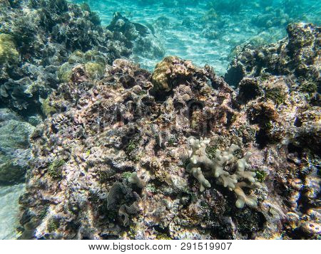 Underwater Coral, Fish, Sand And Sea At West Bay, Roatan, Honduras