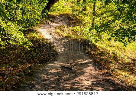 Beautiful Forest Path Illuminated By The Sun At Sunset. August, Summer