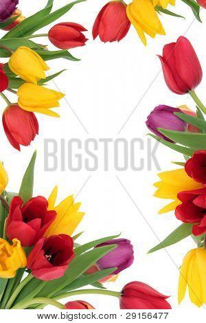 Tulip flower spring border isolated over white background.