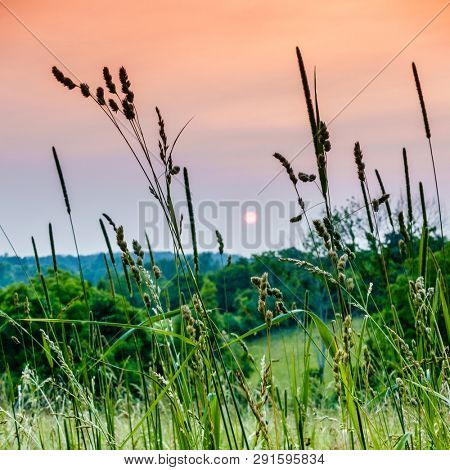 Scenic sunset in the Bluegrass region of Kentucky. Selective focus on the grass in the foreground