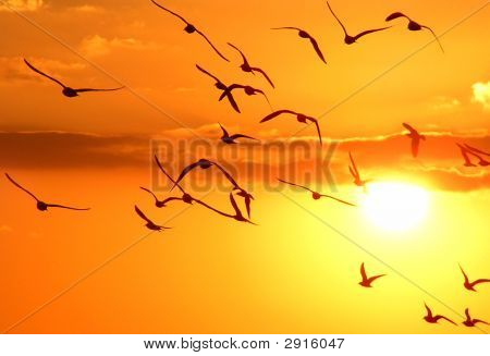 Gulls (Variant)