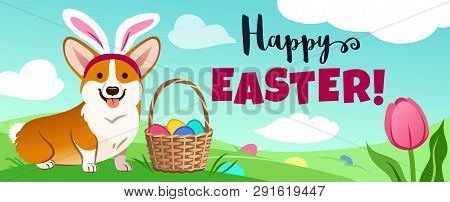 Cute Corgi Dog In Easter Bunny Costume Sits In Green Field, Basket Full Of Candy Eggs, Eggs Hidden I