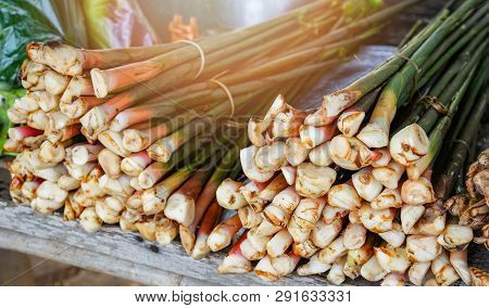 Fresh Trunk Young Galangal From Agriculture Farm Vegetable Organic Galangal In The Market
