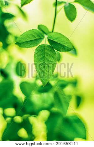 Fresh leaves and sunlight in spring - saving nature, healthy environment and bioenergy concept. Green energy is the future poster