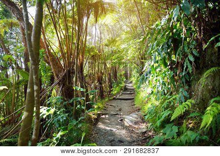Kilauea Iki Trail In Volcanoes National Park In Big Island Of Hawaii. Trail Leads Through Lush Rain
