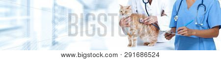 Cat and veterinarian doctor