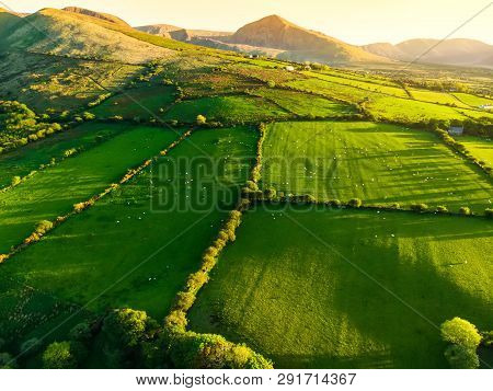 Aerial View Of Endless Lush Pastures And Farmlands Of Ireland. Beautiful Irish Countryside With Emer