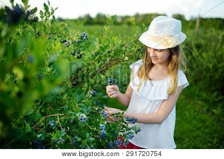 Cute Little Girl Picking Fresh Berries On Organic Blueberry Farm On Warm And Sunny Summer Day