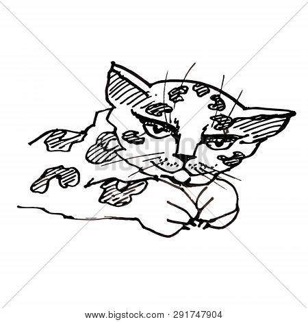 Vector Artistic Natural Leopard Gipard Wild Cat Scetch