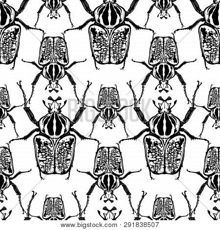 Beetles Goliath On A White Background. Seamless Pattern With Insects. Black And White Sketch. Realis