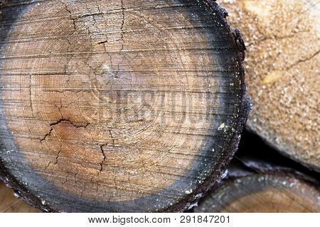 Stump Of Tree Felled - Section Of The Trunk With Annual Rings. Tree Stumps Background. Cross Section