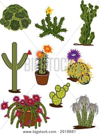 Cactus Clips Cacti