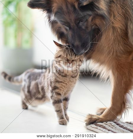 Cat and dog friends together indoors. Friendship between pets.