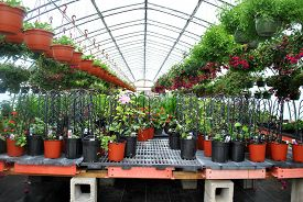 Potted Plants In A Hot Green House