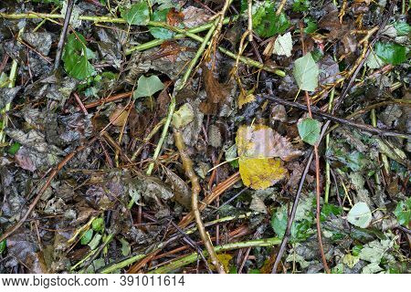 Wet Earth Ground Covered In Leaves, Twigs And Grass
